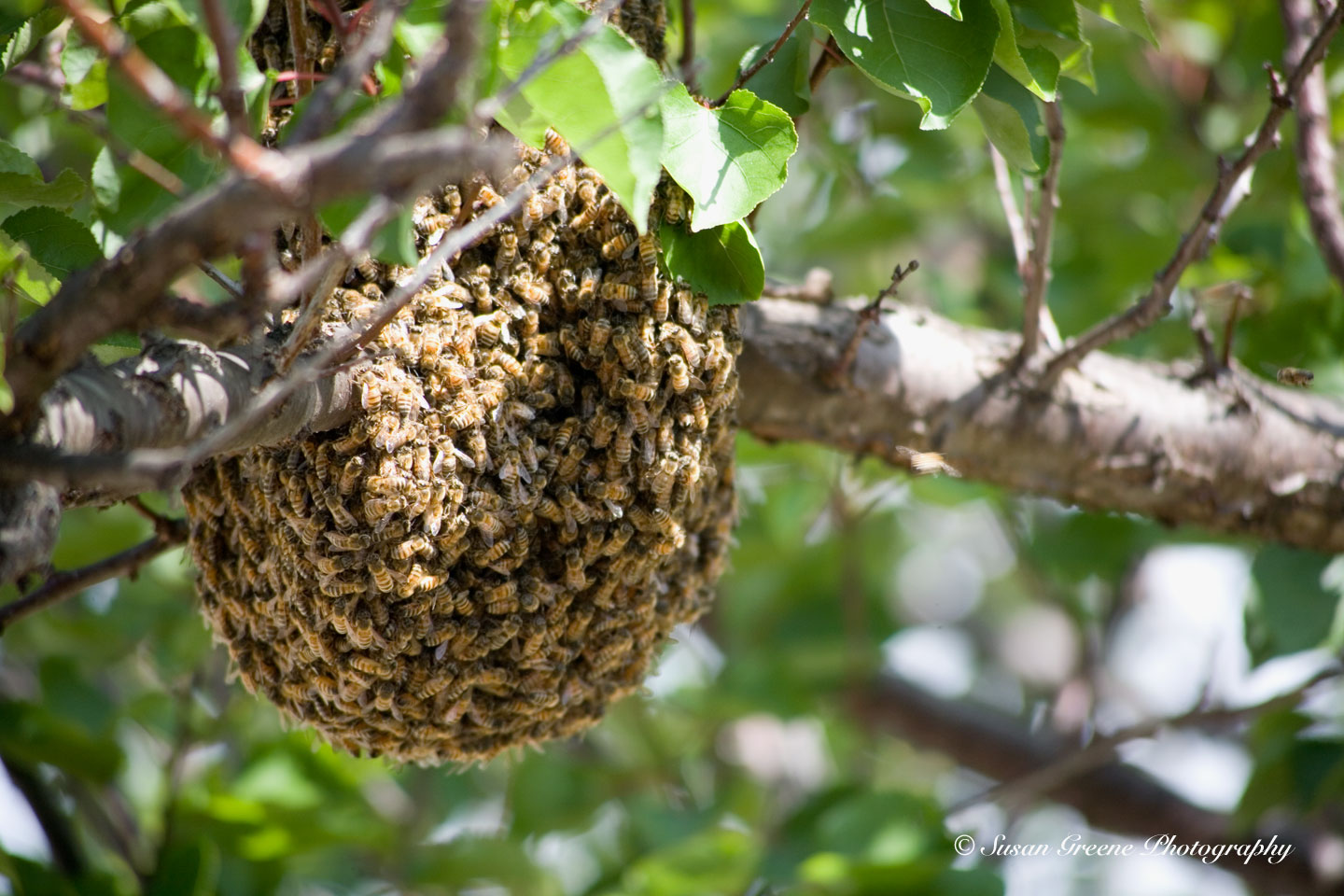 the secret life of bees backyard sisters