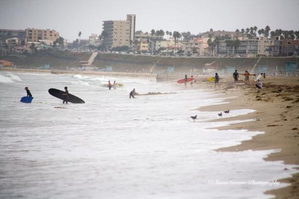 shoreline surfers