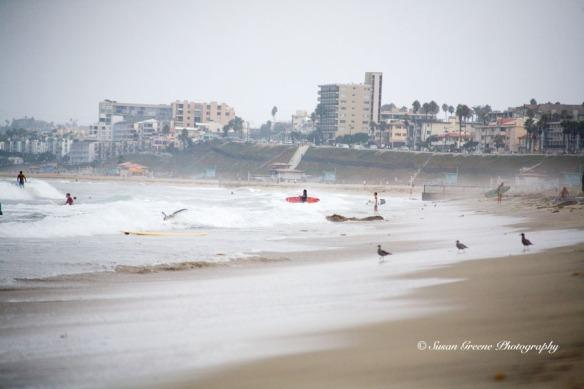 shoreline surfers and birds