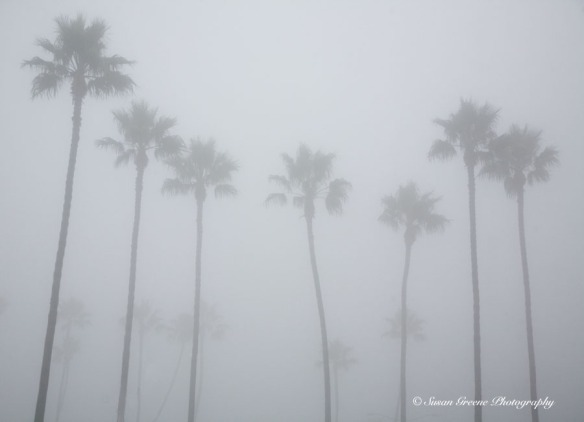Palm trees in fog
