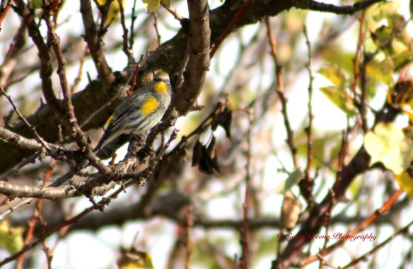 finch in tree