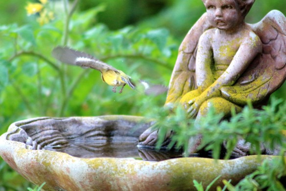 bird bath and bird