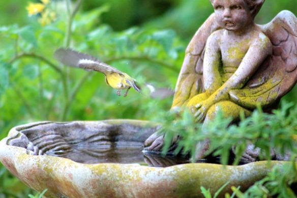 bird bath and bird