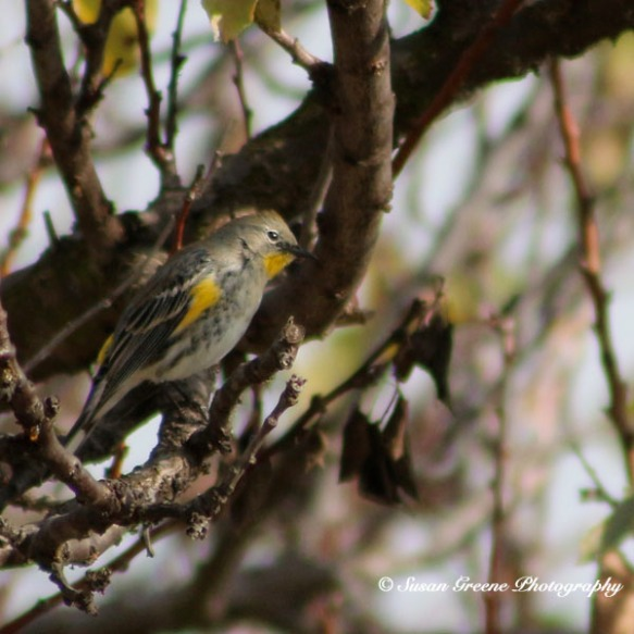 IMG_0885birds