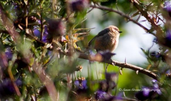 _MG_4522birds