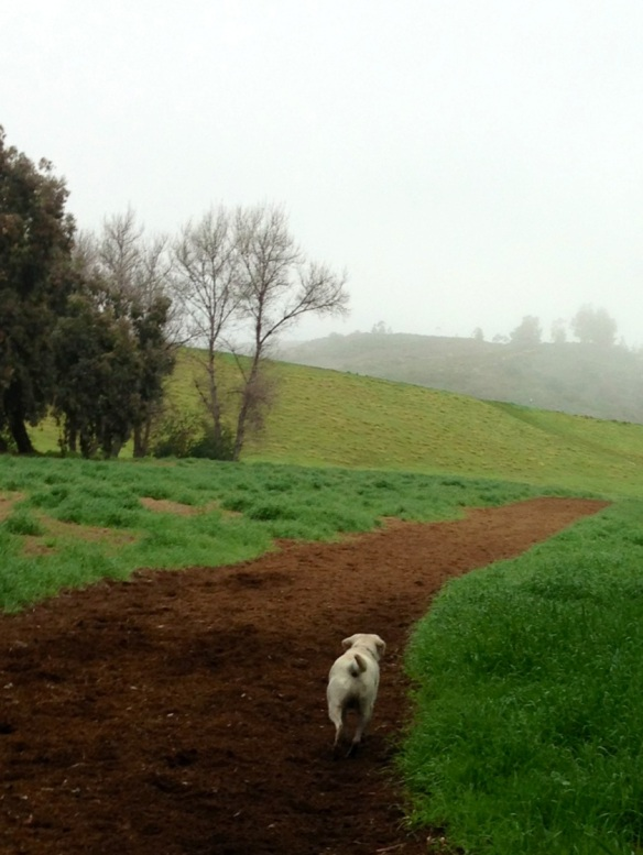 chester on trail