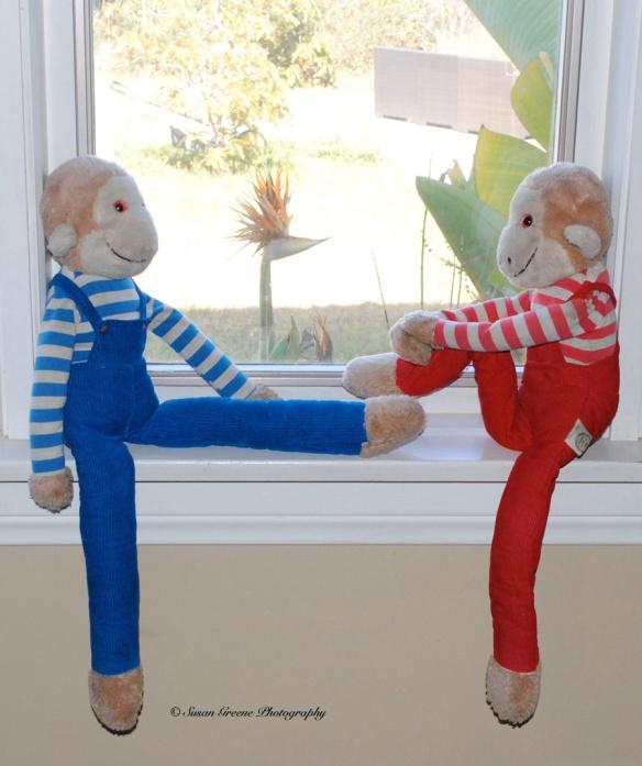 2 monkeys in window
