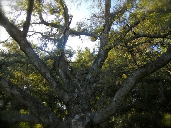 cool oak tree
