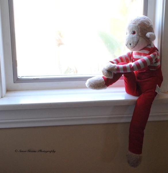 monkey in window