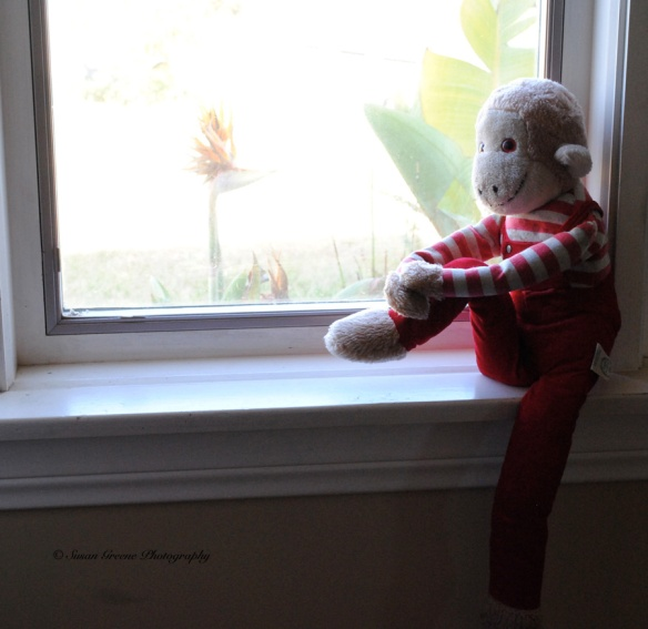 monkey in window2