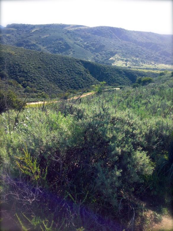 trail vista