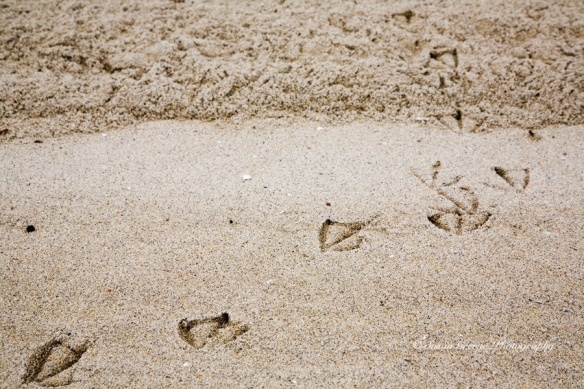 bird feet prints in sand