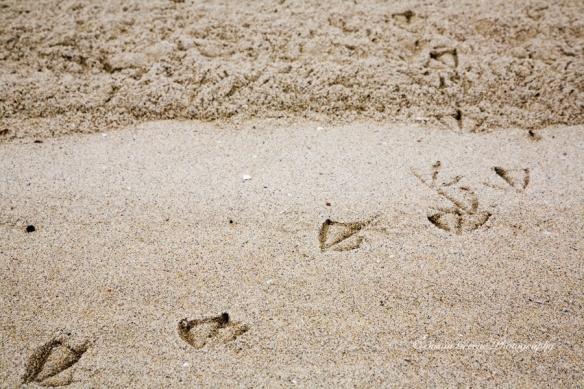bird feet prints in sand