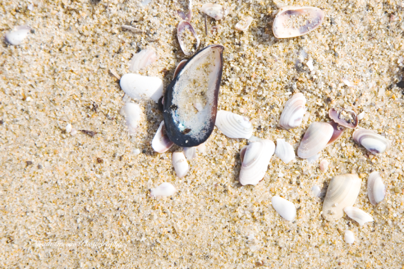 sea shells on shore