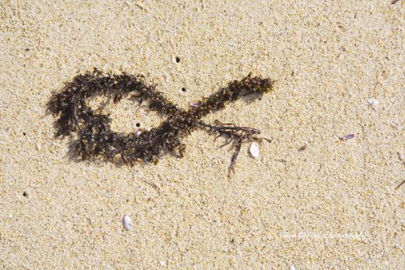 seaweed on shore